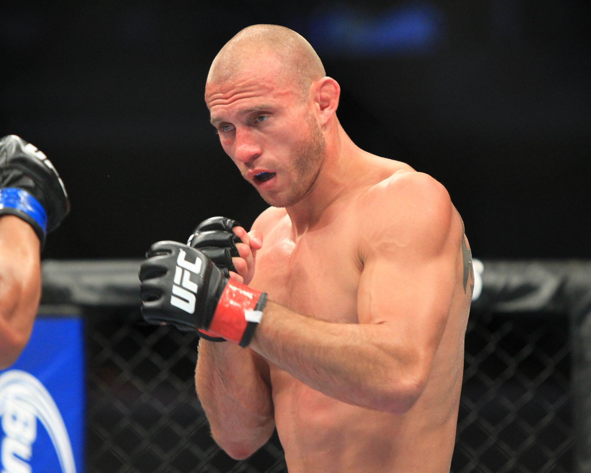 Brittney Palmer Dating Donald Cerrone The gallery for -->...