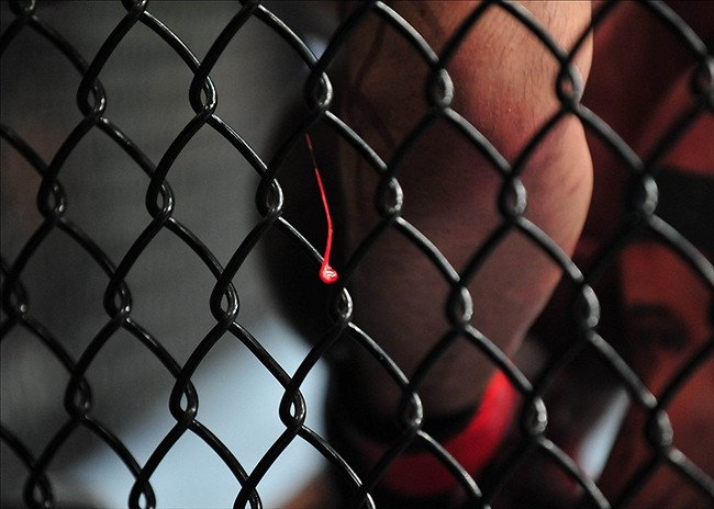 Russian MMA fan asks to fight and delivers huge KO (Video ...