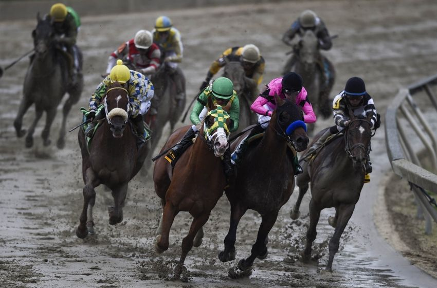 2016 Preakness Stakes - Wikipedia