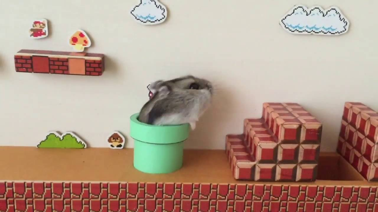watch a hamster play a real life super mario bros level