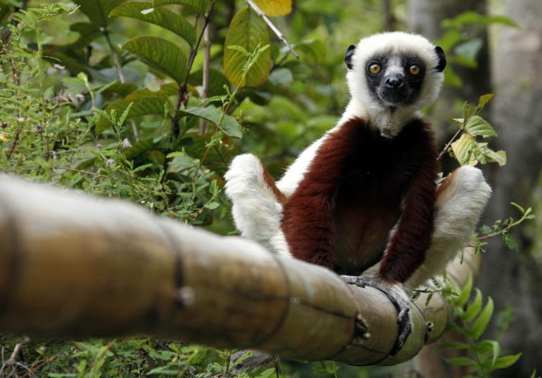 Jovian Zoboomafoo Lemur Passes Away At 20
