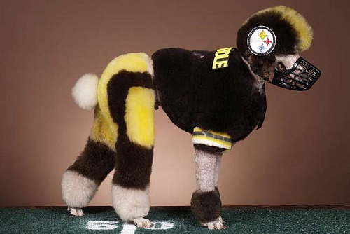 Pittsburgh-Poodle