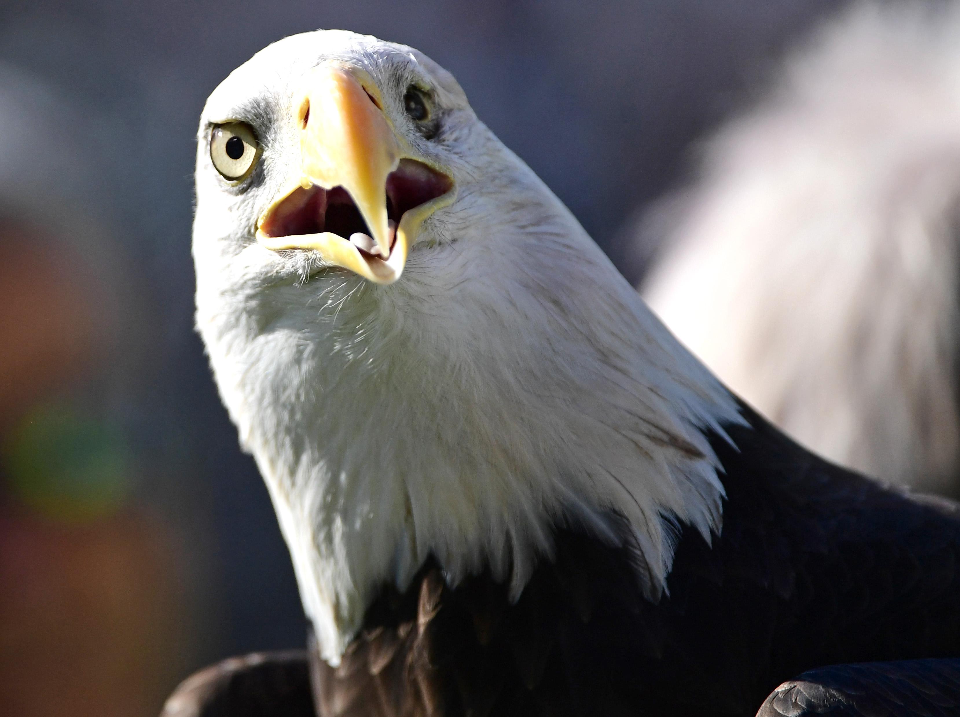 9675168-nfl-atlanta-falcons-at-philadelphia-eagles